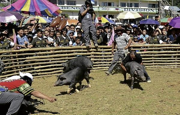 Livestock Growers -- Phuket Lawyer